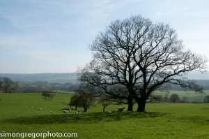 Countryside near Leathley, Yorkshire