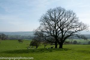 Countryside near Leathley, Yorkshire