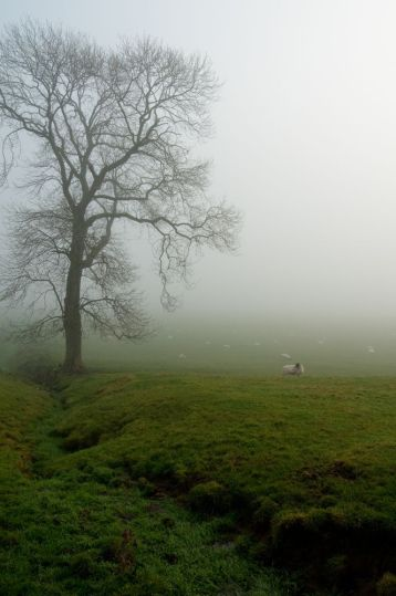 Misty field with bare tree