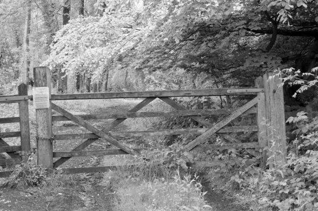 A woodland gate