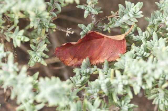 Resting leaf