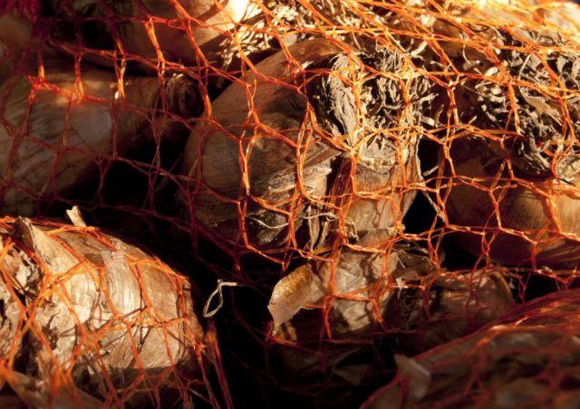 Plant bulbs in a net bag