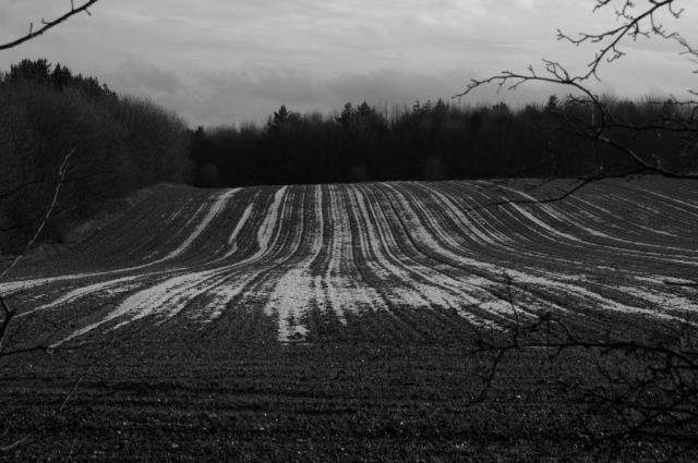 A wintry field
