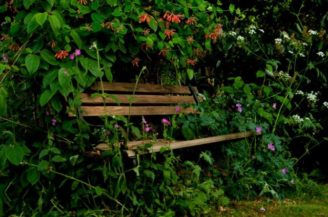 A bench amongst flowers