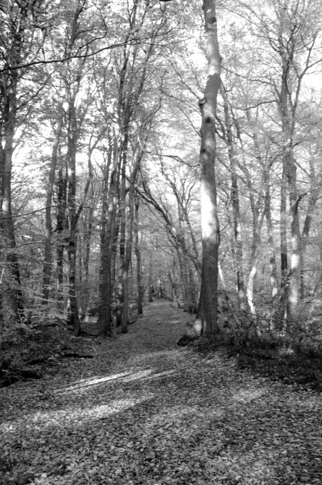 Broxbourne Woods