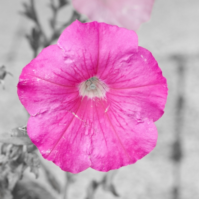 Pink flower with delicate petals