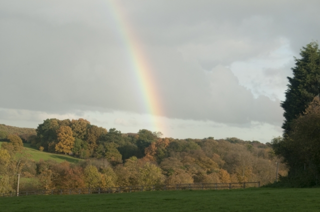 Rainbow over autumn trees