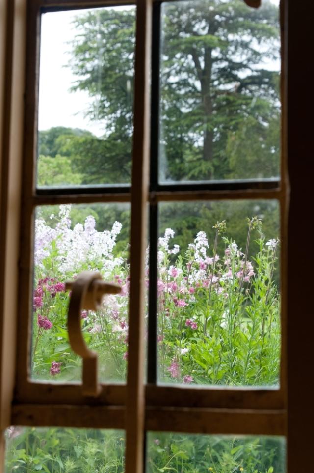 Flowers beyond the window