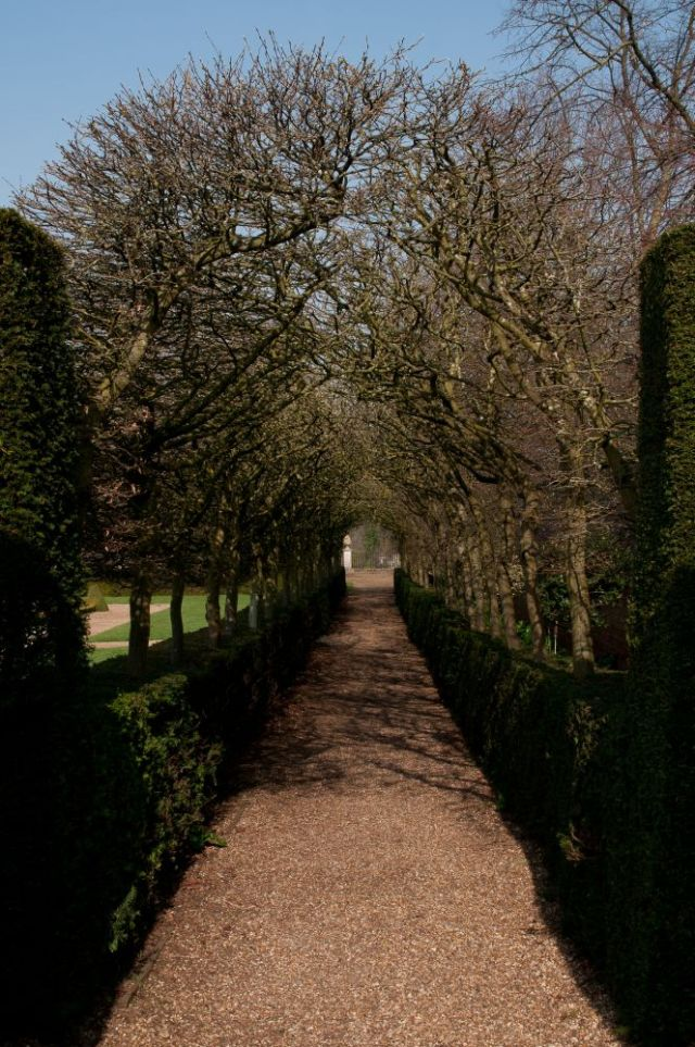 Tree-lined pathway, Ham House
