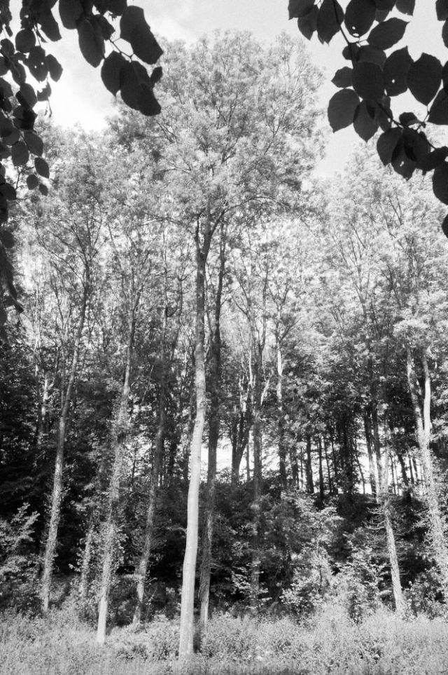 Trees framing trees