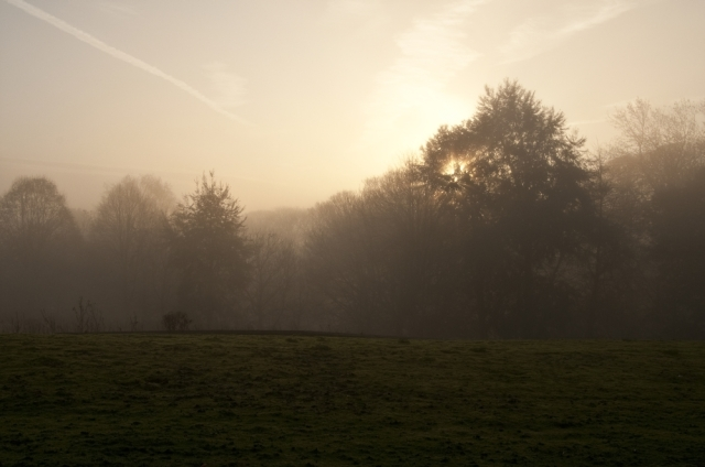 November mist rising in early morning sunlight, against a background of trees